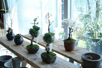盆栽3/23-2.jpg