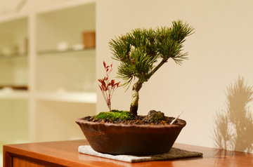 bonsai1228_1.jpg