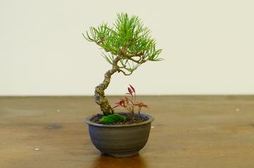 bonsai1228_2.jpg