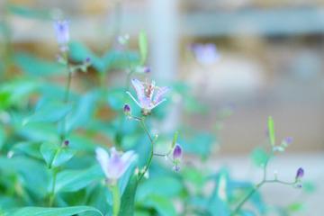 シューレの庭2017100704.JPG