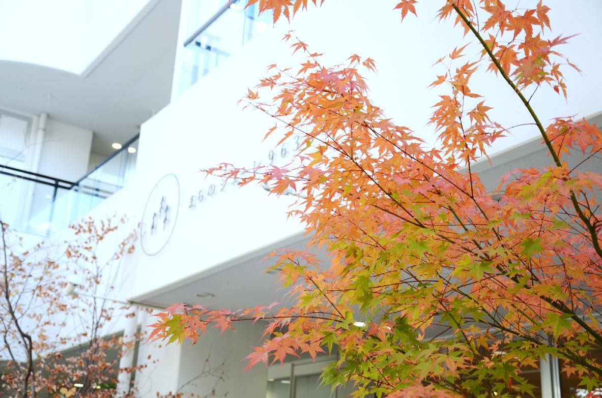 http://www.schule.jp/news/DSC_8371.jpg