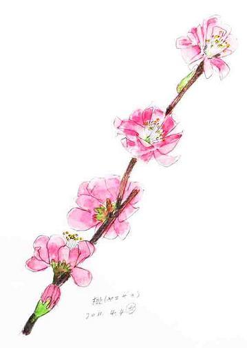 桜のコピー.ブログjpg