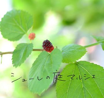 マルシェ皐月blog.jpg