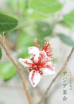 asia_chakai_1.jpg