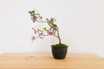 bonsai20161128_2.JPG