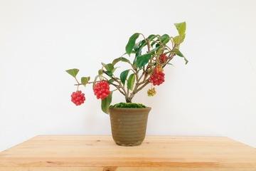 bonsai20161128_3.JPG