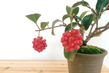 bonsai20161128_4.JPG
