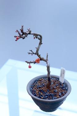 bonsai2017122901.JPG