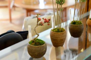 bonsai20.3.12 _1.JPG