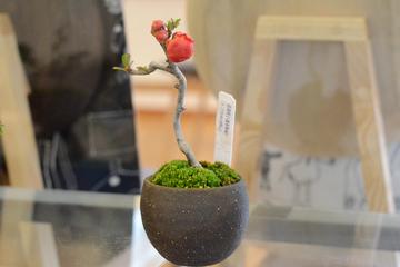 bonsai20.3.12 _5.JPG